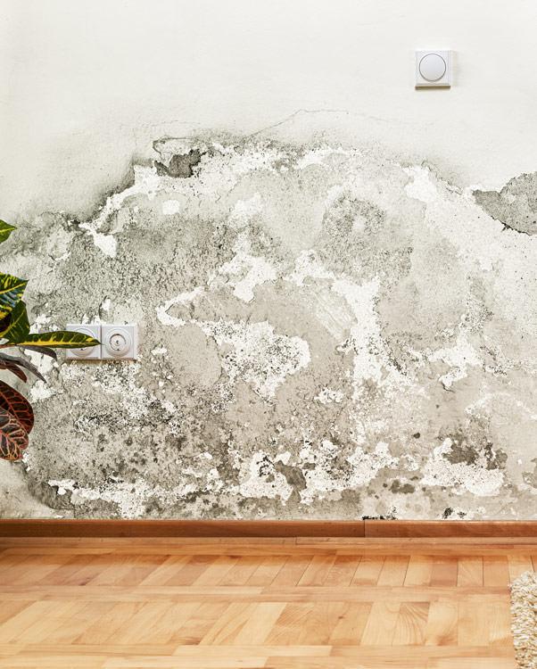 experts b timents d occitanie tarbes expertise d g ts des eaux dans le 65. Black Bedroom Furniture Sets. Home Design Ideas